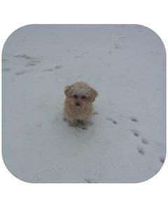 2012-01-20 雪 マリモ2.jpg