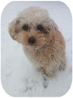 2012-01-20 雪マリモ.jpg