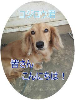 2012-06-27 コジロウ.jpg