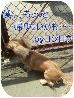 2012-06-27 コジロウ1.jpg