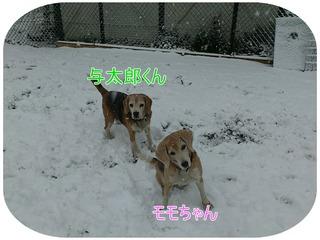 与太郎・もも 雪.jpg