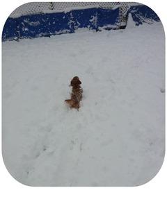 雪 くるみ.jpg