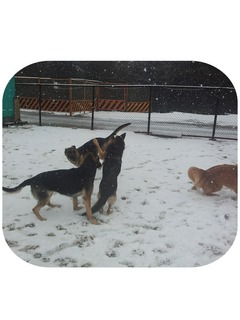 雪 訓練所犬.jpg