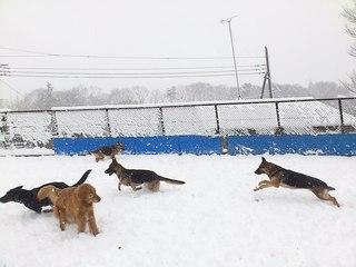 雪 訓練所2.jpg