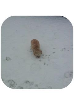 雪マリモ2.jpg